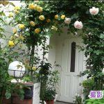 平泉成の自宅のバラがヤバい!妻の里香との出会いや娘や息子の職業(仕事)は?【メレンゲの気持ち】